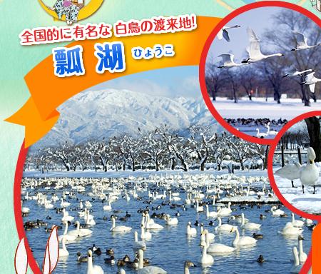 全国的に有名な 白鳥の渡来地! 瓢湖