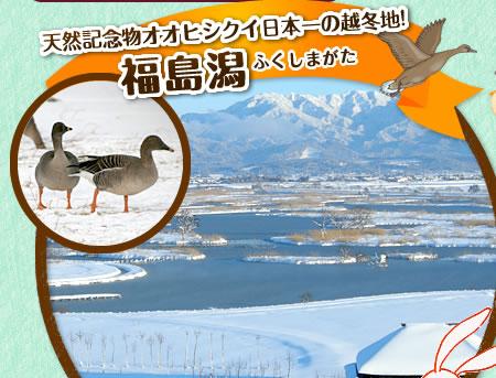天然記念物オオヒシクイ日本一の越冬地!福島潟