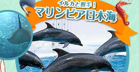 イルカと握手! マリンピア日本海
